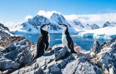 Penguins in Antarctica, emission control area